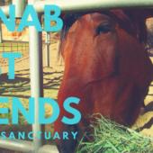 Episode 15: Kanab (Utah) & Best Friends Animal Sanctuary